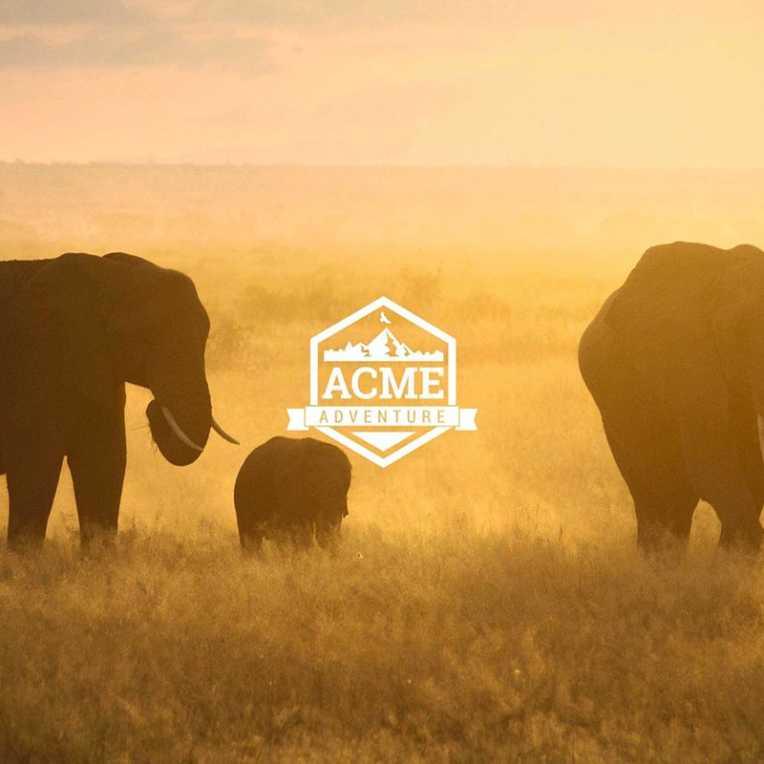 ACME Adventure