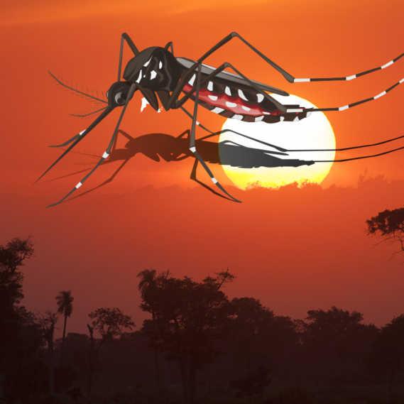 Brasilien Gelbfieber Ausbruch