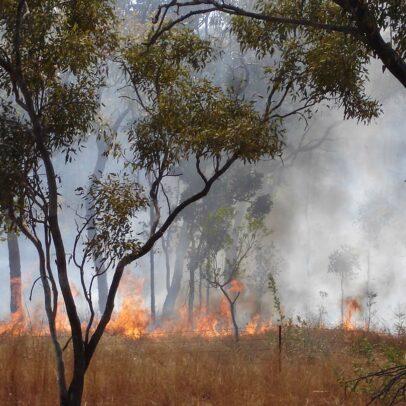 Waldbrand Australien